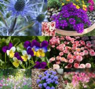 Mixed Annual Flowers Seeds 2000 + Best Mix, Rainbow of Colours in your Garden
